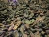 15 mars : l\'horreur à Auschwitz